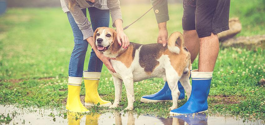 Versicherung Hund